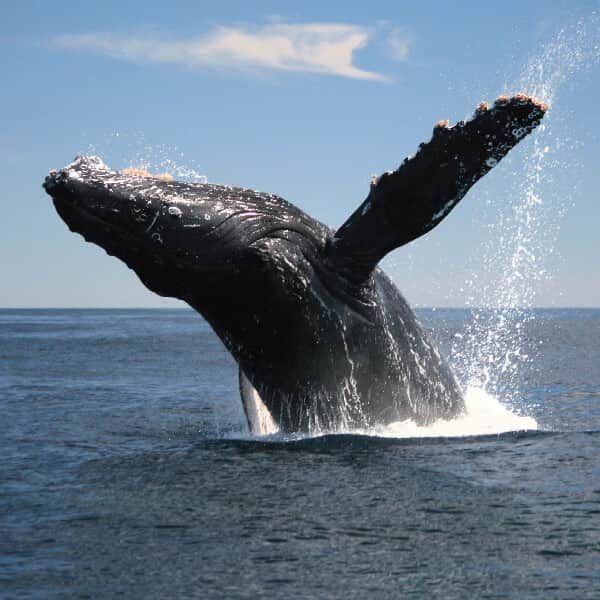Sea Safari – Whale Watching
